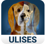 Osteología en Perros