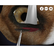 Oftalmológica en Perros (Free)