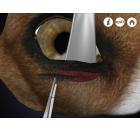 Oftalmología en Perros