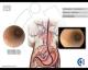 Anatomía endoscópica digestiva del perro